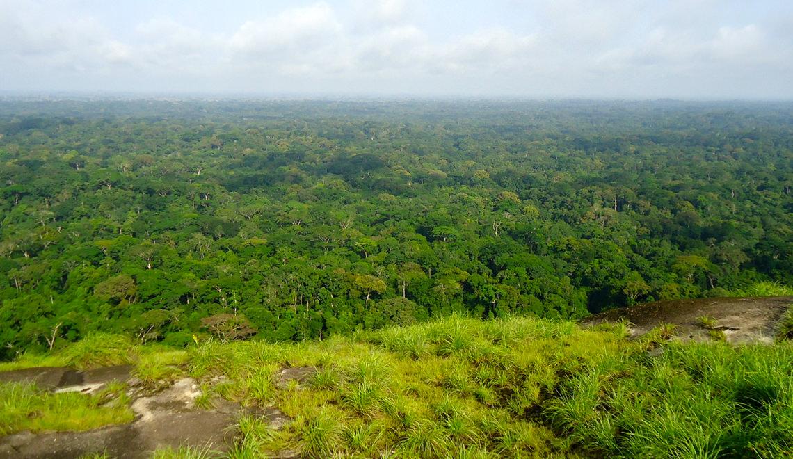 Le Parc National de Taï