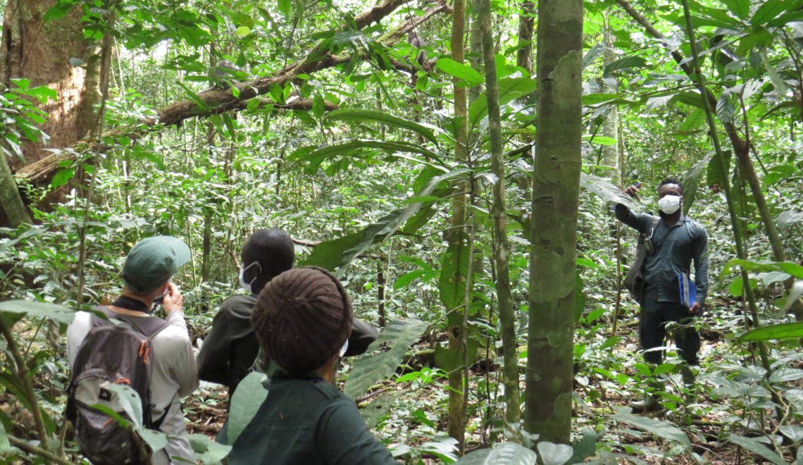 Comment bien se comporter en forêt, Parc National de Taï