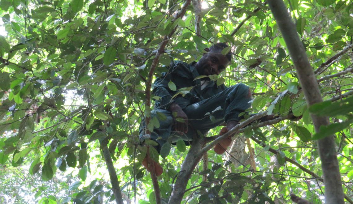 Les écoguides vous accueillent au coeur de la forêt primaire pour vous faire découvrir sa faune et sa flore