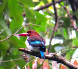 Oiseau multicolore sur une branche