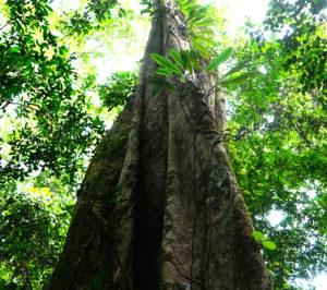 Tronc d'arbre avec des feuilles